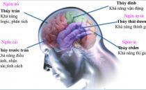 Khám phá tiềm năng não bộ qua sinh trắc vân tay tại E4P