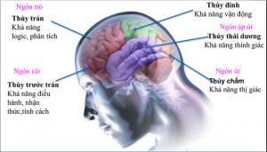 Khám phá tiềm năng não bộ qua sinh trắc vân tay